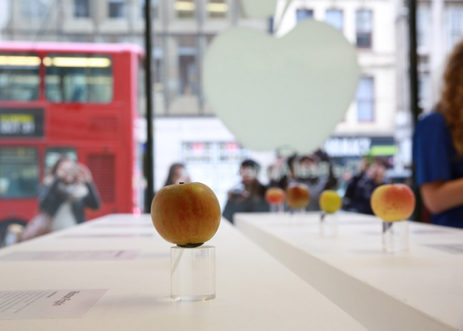 real-apple-store-hed-2014