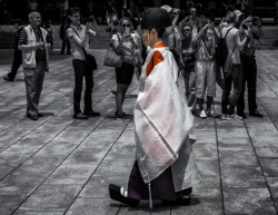 Shinto priest leading a wedding procession at Meiji Shrine, Tokyo